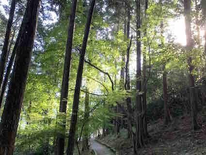 201109木漏れ日.jpg