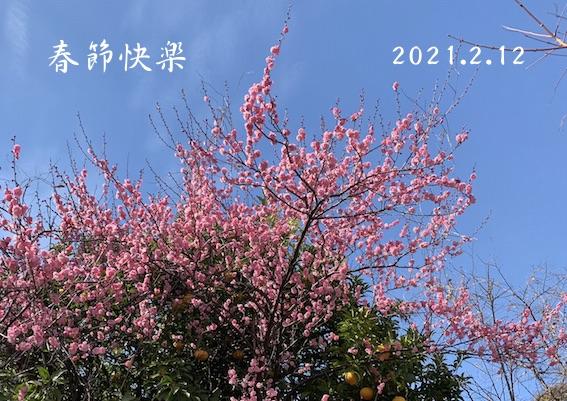 210212春節挨拶.jpg