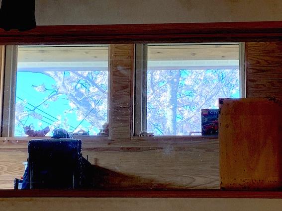 190406桜02インナー窓.jpg