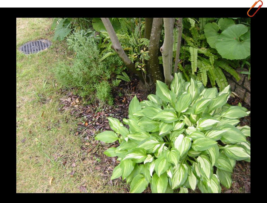 http://www.mk-ds.jp/works/images/mk_garden0104.JPG